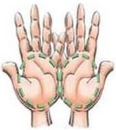 duas palmas da mao